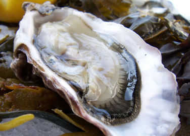 Image: Porlock Bay oysters are back after 120 years