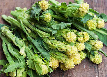 White sprouting broccoli