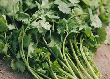 bunch-of-coriander-homemade