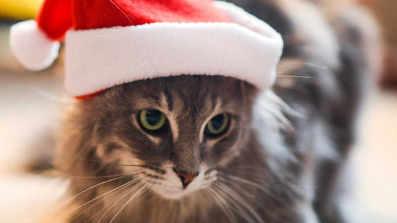 Image: The purrrfect Christmas, according to your cat