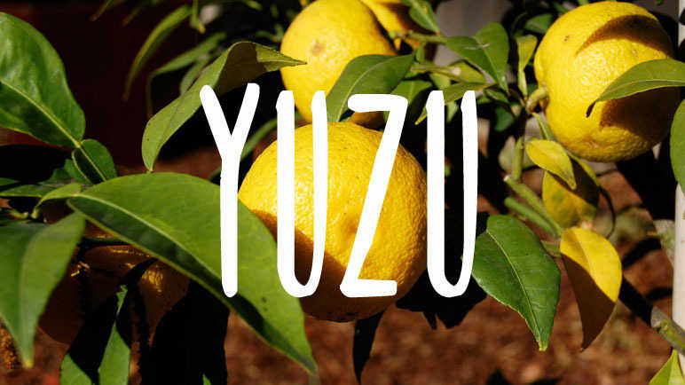 Yuzu: meet the trendy ingredient you'll be cooking with in 2016