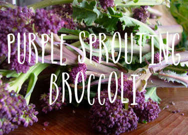 Image: 8 ultimate recipes for purple sprouting broccoli