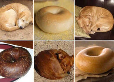 puppy-or-bagel-homemade