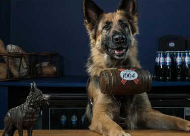 dog-serving-beer-homemade