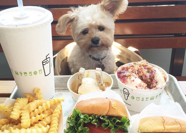 popeye-the-foodie-dog