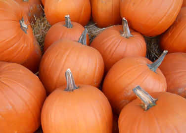Image: Halloween horror: UK wastes 18,000 tons of food while carving lanterns