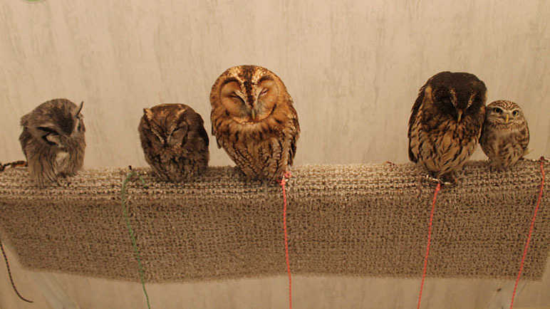 Image: Move over Cat Cafes – It's all about the Owl Cafe now