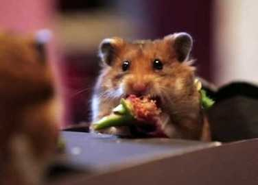 Image: Tiny Hamster goes on the cutest tiny date