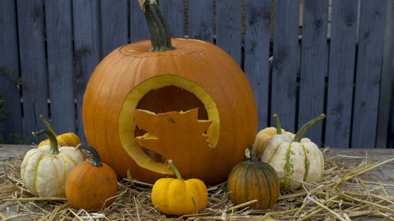 Image: The pumpkin carving GIF guide