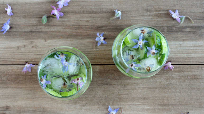 borage-cucumber-gin-homemade