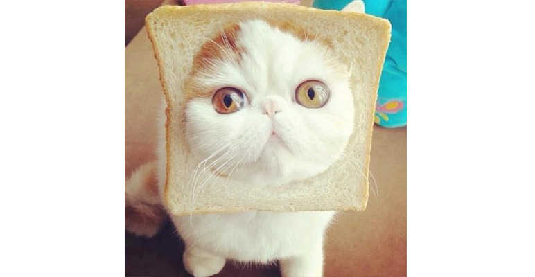 Cats in Bread