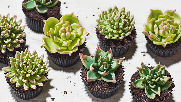 Recipe Succulent Chocolate Cupcakes Sainsburys
